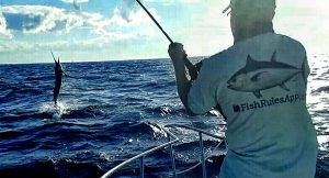Jupiter Sailfish