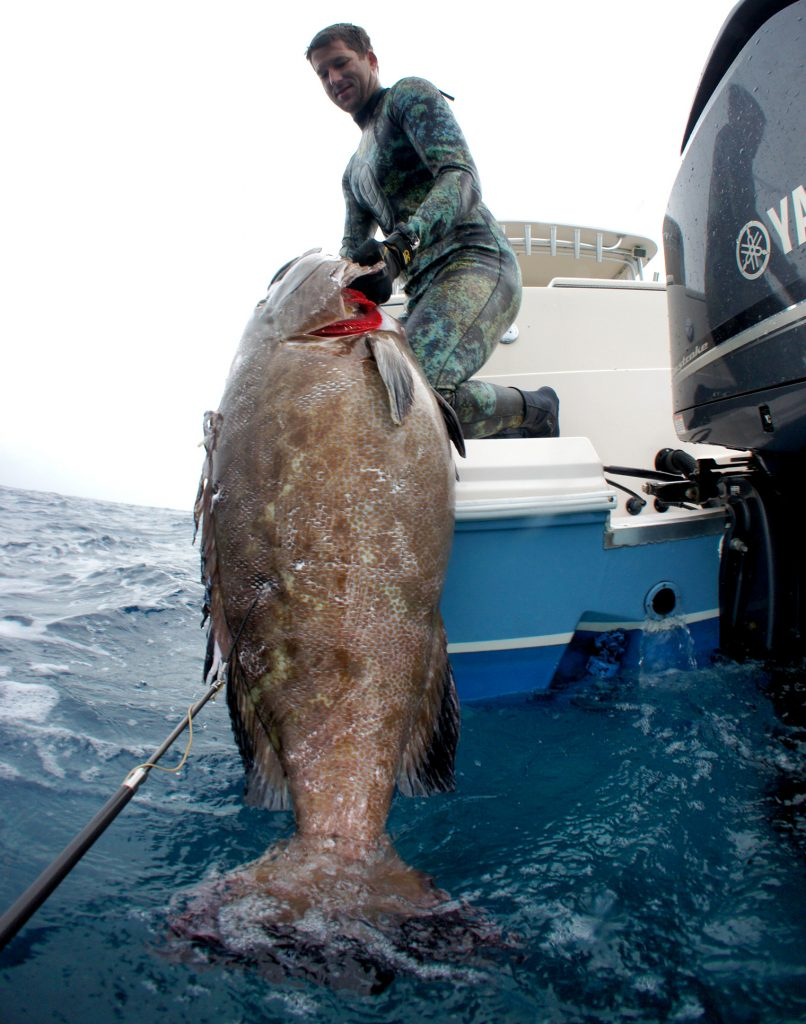 diving for black grouper