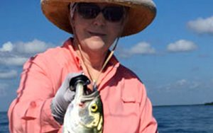 Charlotte Harbor Bluefish