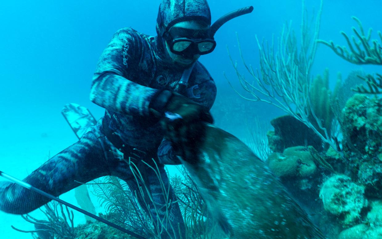 Dive Bomb Black Grouper