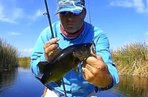 Bass Fishing in the Savannas