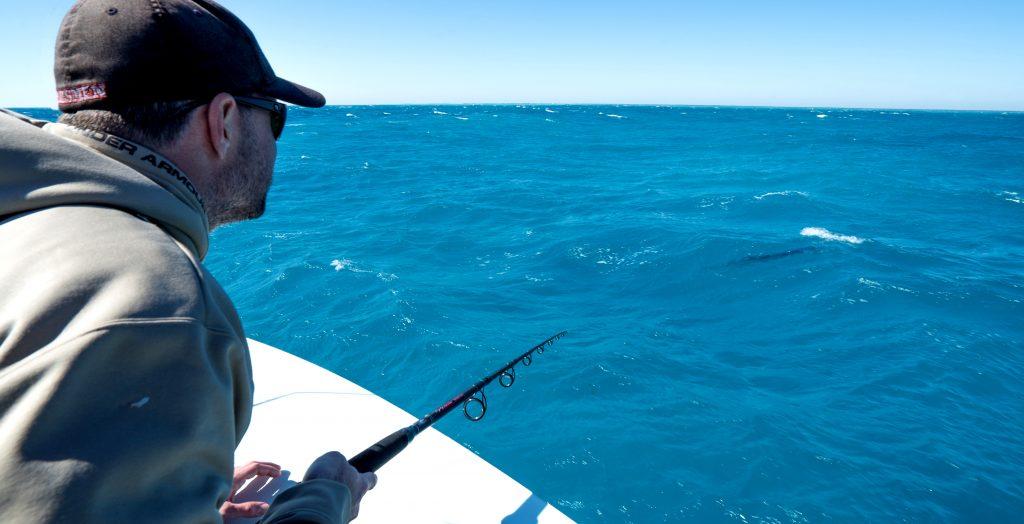 sight-fish sailfish