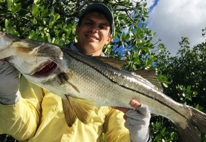 Everglades Snook on Fly