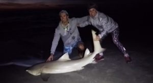 Surf Fishing Sharks