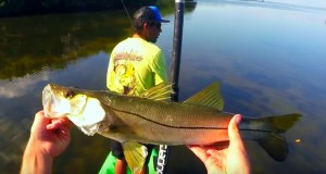 Weedon Island Small Snook