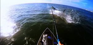 Paddleboard Tarpon