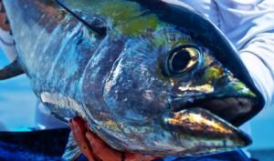 Beast Blackfin