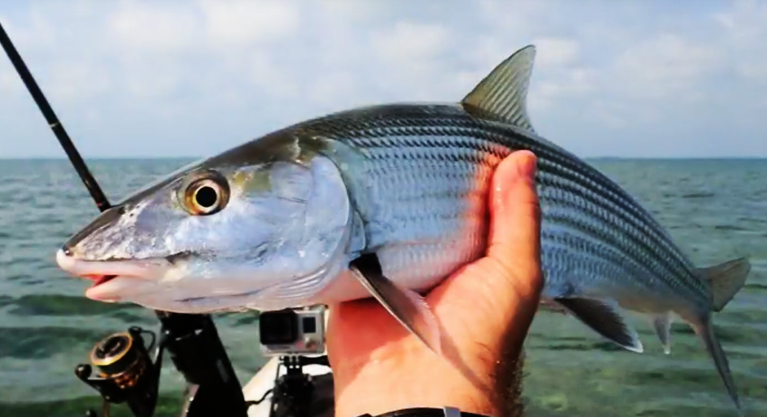 Tarpon fish images galleries with a bite for Fly fishing florida