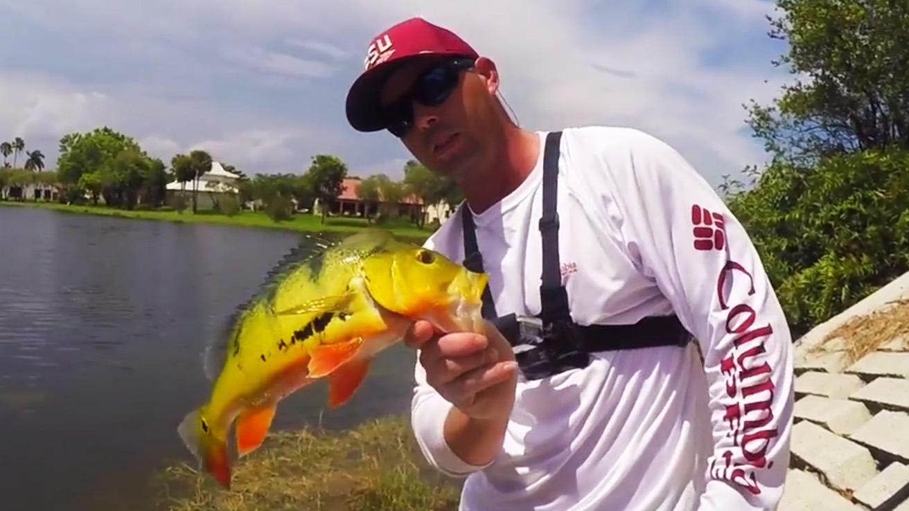 Peacocks florida sportsman for Florida sportsman fishing report
