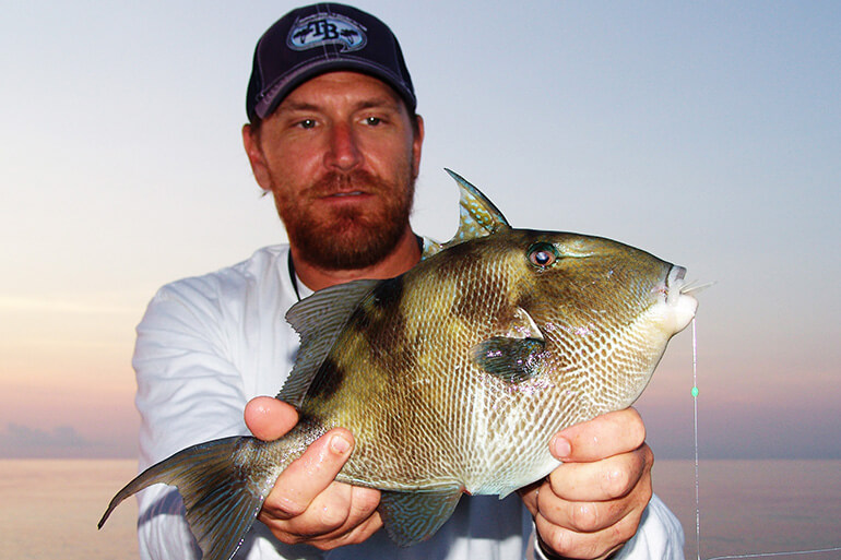 Tips for Targeting Triggerfish