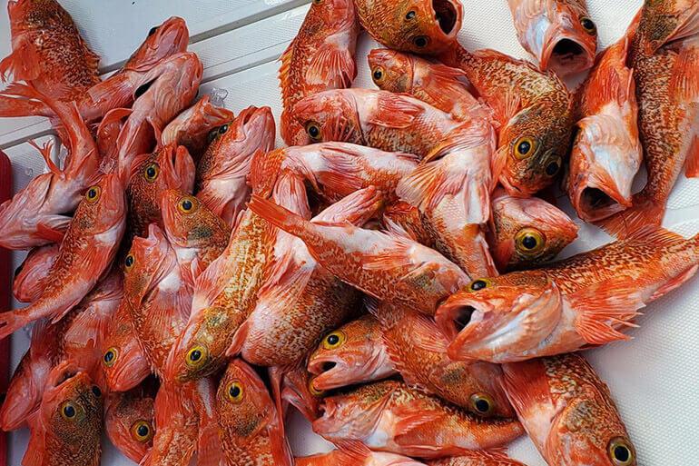 port everglades rosefish report