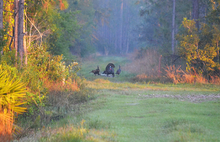 Pre-Season Turkey Scouting Checklist