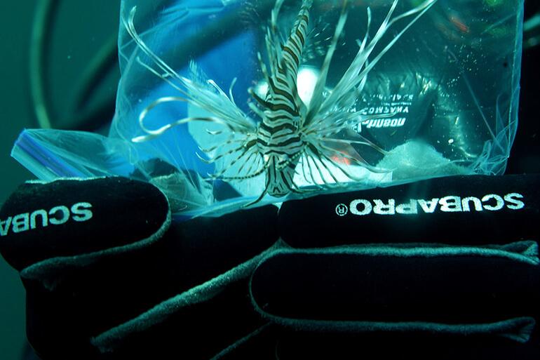 exotic lionfish spearfishing