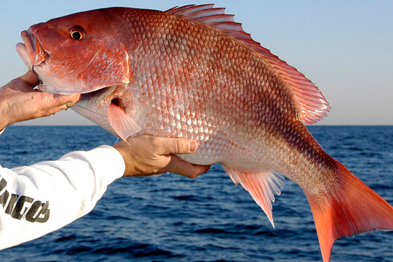 red snapper conservation