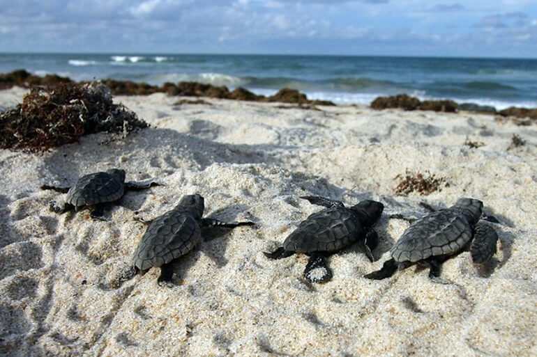 Help sea turtles survive