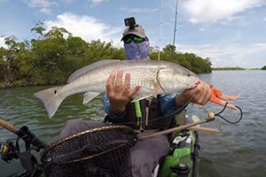 inshore mangrove redfishing