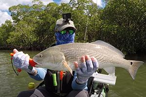 redfish mangrove fishing