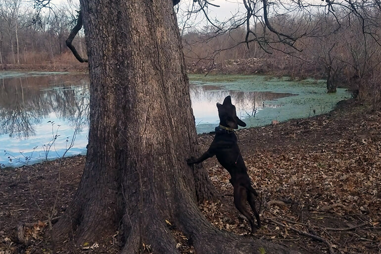 dog to train for squirrel hunting