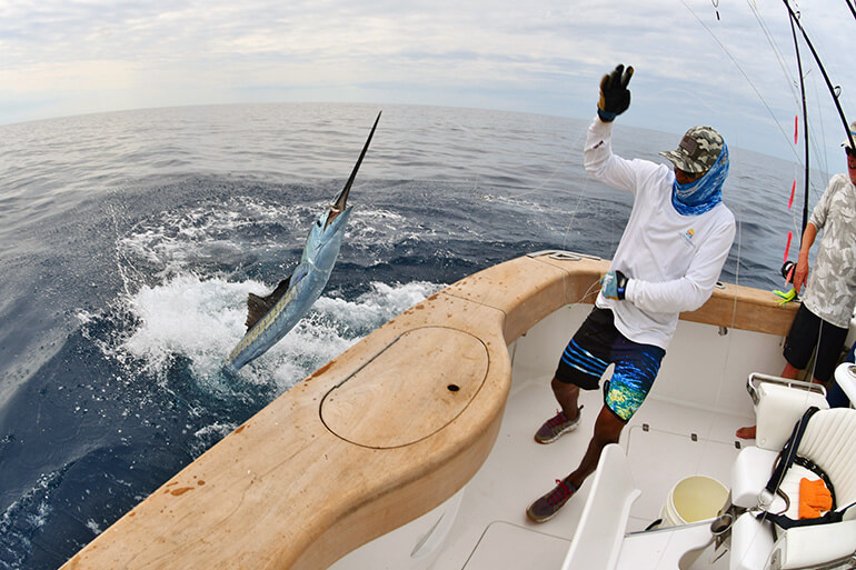 light tackle sailfish