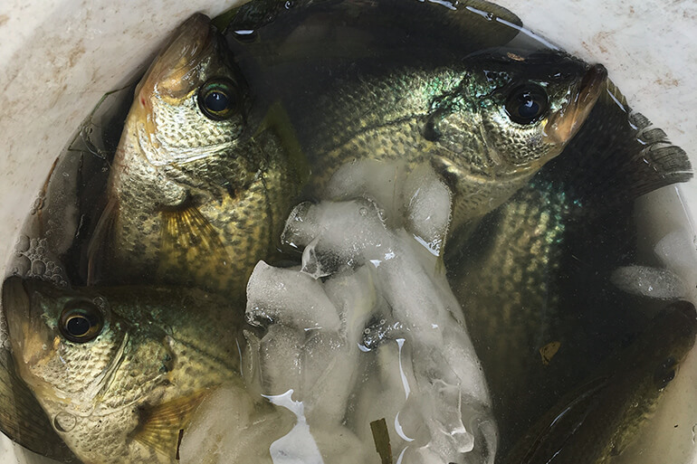 cold weather crappie fishing