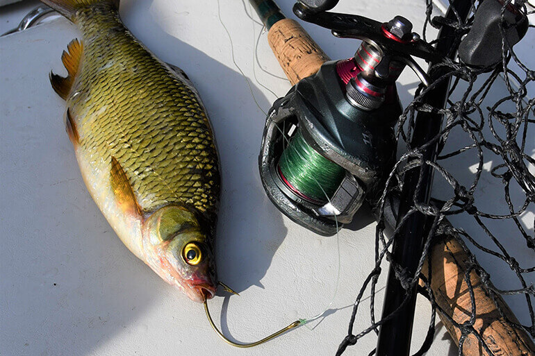 Best Ways to Hook a Live Shiner in Every Situation