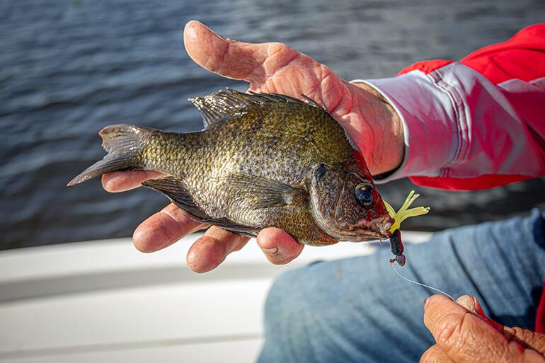 freshwater crappie jigging