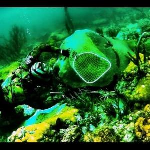 James\'s Dive