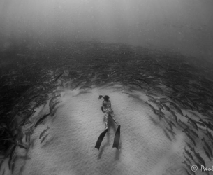 The Abyss with Snook