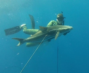 Mike's 60-foot depths cobia