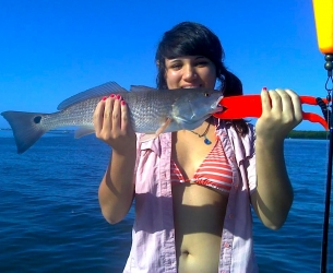 Sarasota Redfish