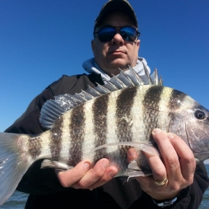 Big Bend Sheepshead