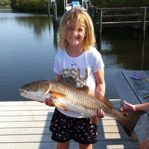 Family Redfish