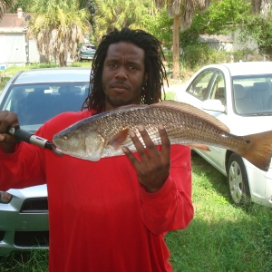 Desoto Redfish