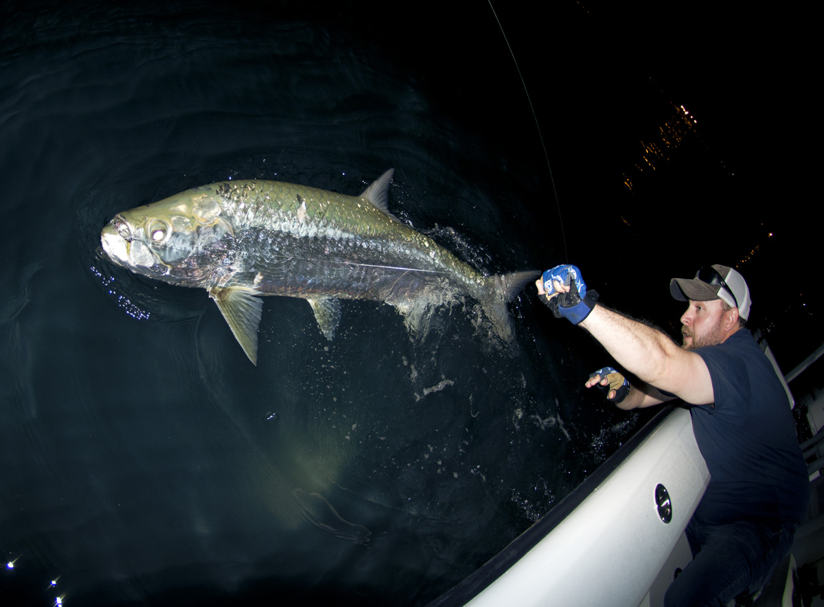 How to catch tarpon florida sportsman night time tarpon nvjuhfo Images