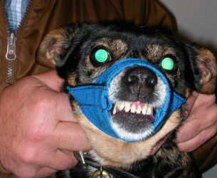 Schmatlz~herring's pooch Buenchkin, appears to have escaped deathrow.