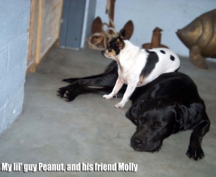 Big Bend Members Pets