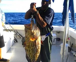 Dry Torugas Grouper