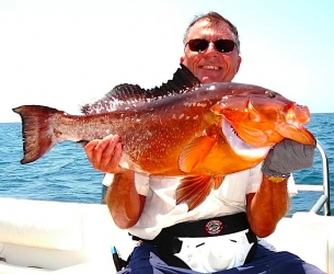 Panhandle Red Grouper