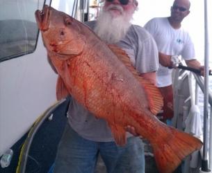 Cape Coral Red Grouper