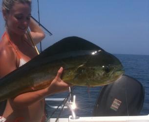 Jacksonville Dolphin