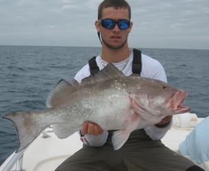 Gulf Red Grouper