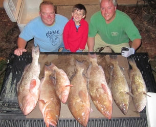 Red Groupers