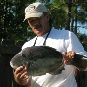 Triggerfish on Father\'s Day