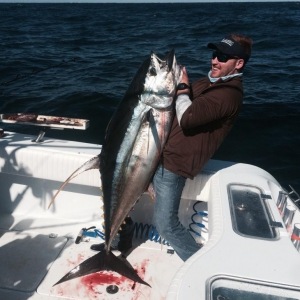 Jumbo Yellowfin