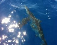 lycia-bahamas-trip-6-31-12-035