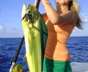 Nicole\'s Bright Dolphin